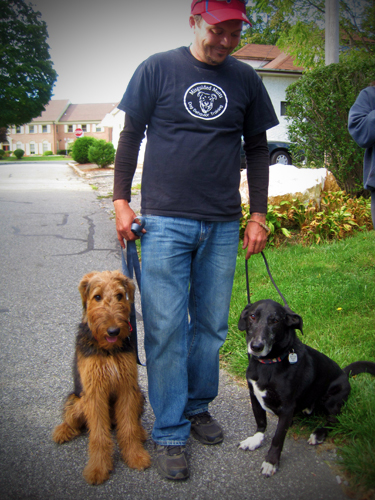Misguided Mutts Dog Behavior Training Home Contact Us